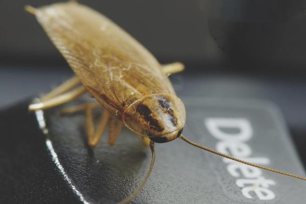 Виды электроприборов от тараканов