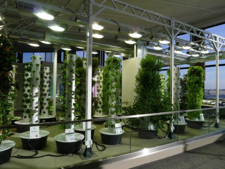 Как выбрать лампы для растений