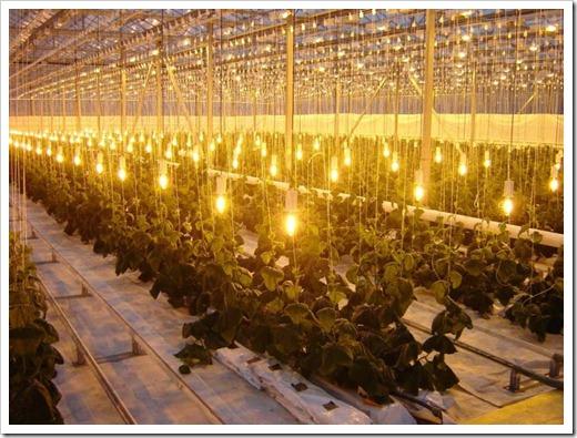 Светодиодные осветительные приборы для теплиц
