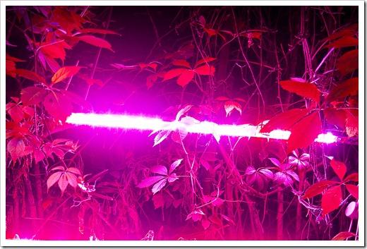 Фитосветильник или светодиодная лампа