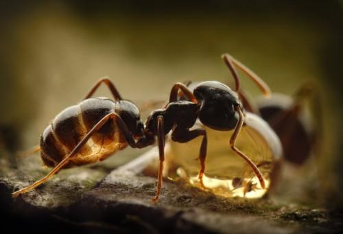 Чем полезна муравьиная кислота
