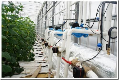 Технологии автоматизации теплиц и парников