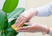Как ухаживать за растениями в офисе