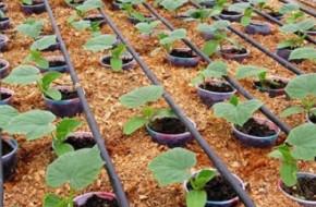 В каких случаях необходим автоматический полив растений