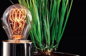 Какие лампы лучше для растений