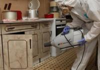 Как уничтожить тараканов в частном доме навсегда
