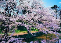 Как преображается природа весной