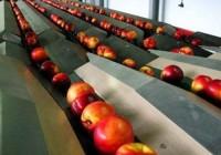 Какое оборудование используется для переработки фруктов и овощей?