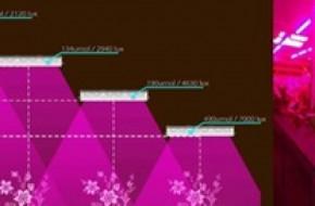 Что такое фитосветильники для растений и как выбрать
