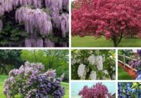 Популярные виды садовых растений