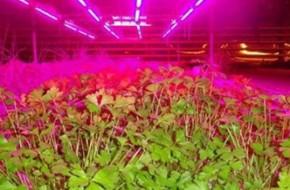Как выбрать фитолампу для растений?